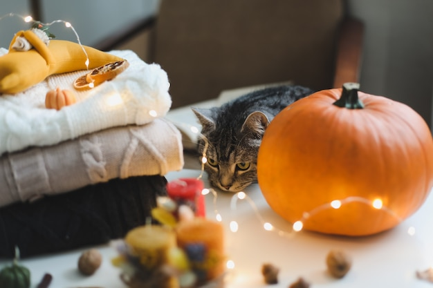 Schattige kat en herfst stilleven met pompoen en truien op gezellige achtergrond