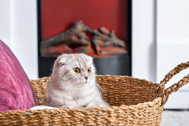 Schattige kat in de buurt van open haard thuis. concept van het stookseizoen