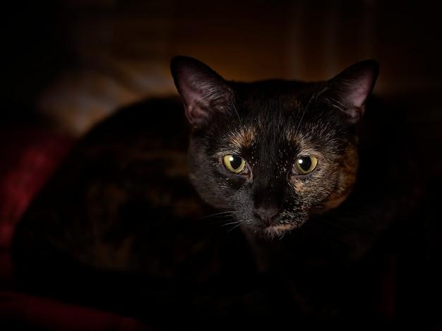 Schattige kat in de duisternis