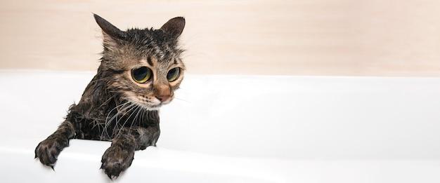 Schattige kat in het bad na het douchen