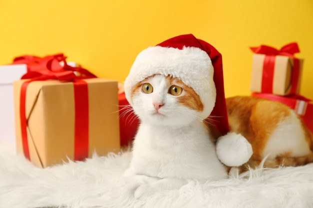 Schattige kat in kerstman hoed en geschenkdozen op kleur muur achtergrond color