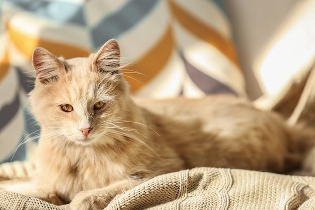 Schattige kat liggend op beige plaid thuis