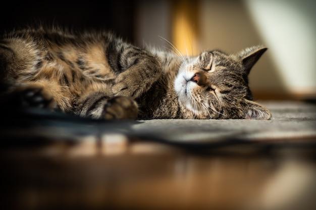 Schattige kat liggend op de vloer thuis