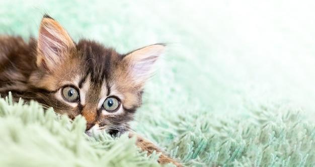 Schattige kat ligt op een groene pluizige deken en kijkt naar de camera