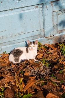 Schattige kat ligt op vallende oranje bladeren. zonnige herfst.