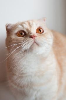 Schattige kat met grote ogen