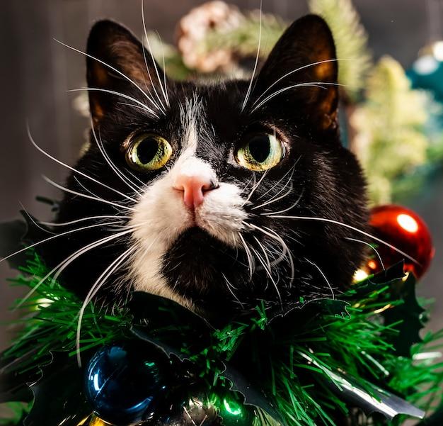 Schattige kat met kerstversiering op zijn borst.