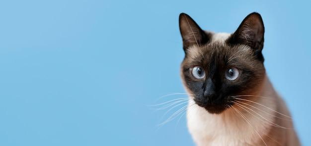 Schattige kat met zwart-wit muur achter haar