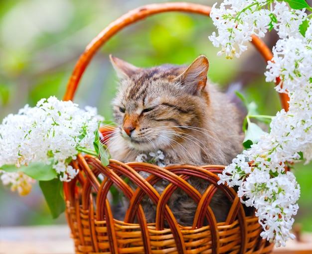 Schattige kat ontspannen in een mand met witte lila bloemen