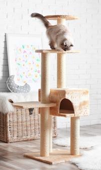Schattige kat op krabpaal thuis