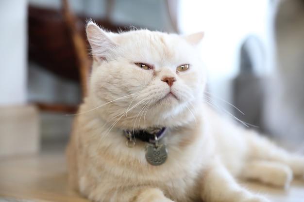 Schattige kat op zoek ontspannen
