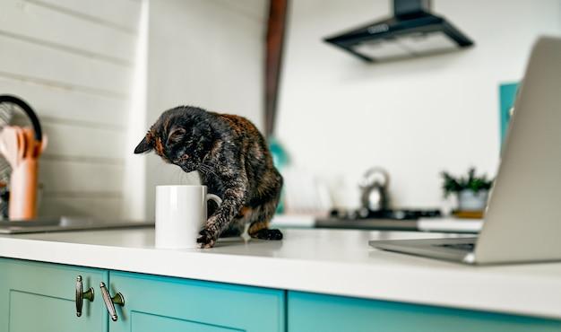 Schattige kat zit op een tafel speelt een poot met een kopje koffie, in de buurt van een laptop. grappige werk assistent.