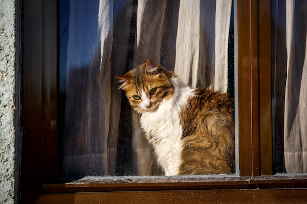 Schattige kat zittend op raam achter het glas en kijken naar buiten, buiten uitzicht.