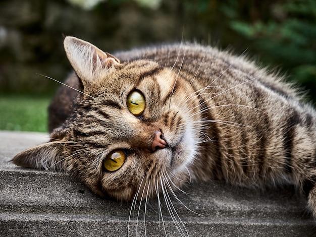 Schattige kattenslaap in het park.