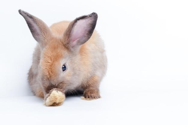 Schattige kleine bruine konijn op een witte achtergrond. het concept van zoogdieren en pasen. geïsoleerd