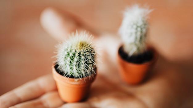 Schattige kleine cactussen op een hand