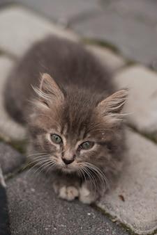 Schattige kleine grijze kitten met groene ogen ontspannen, close-up