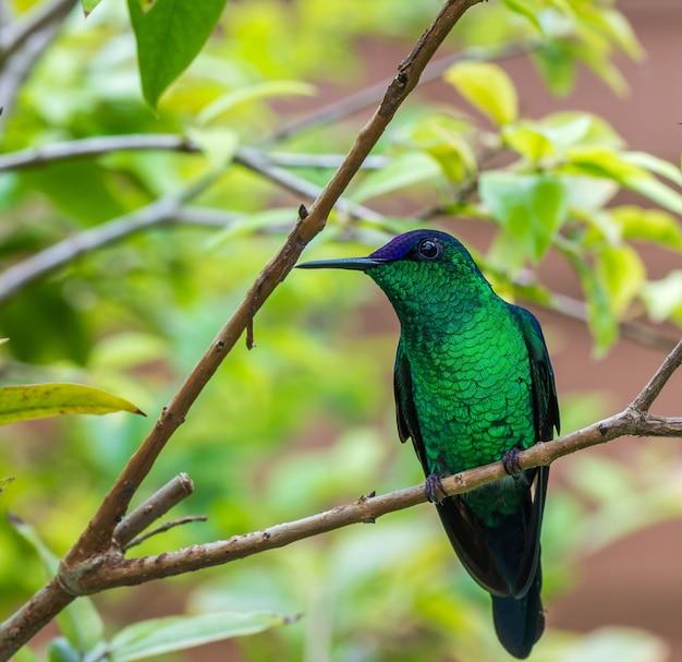 Schattige kleine groene kolibrie staande op een tak in een tuin