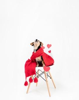 Schattige kleine hond bedekt met een sjaal