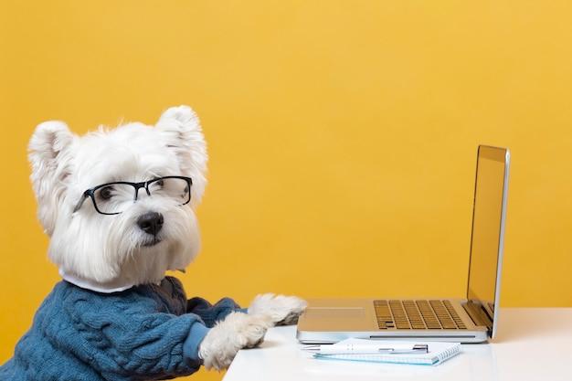 Schattige kleine hond die zich voordoet als een zakenman