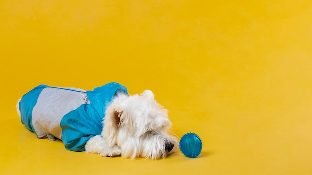 Schattige kleine hond geïsoleerd op geel