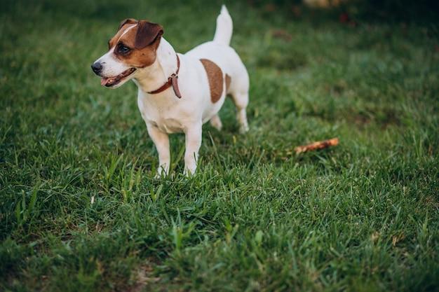Schattige kleine hond in de achtertuin