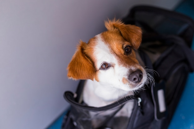 Schattige kleine hond in zijn reiskooi klaar om aan boord van het vliegtuig op de luchthaven te gaan. huisdier in de cabine. reizen met honden concept