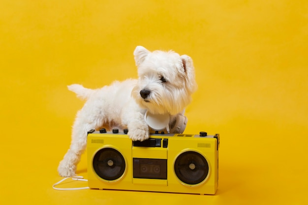 Schattige kleine hond met cassettespeler