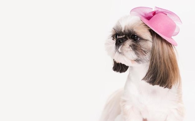 Schattige kleine hond met een hoed