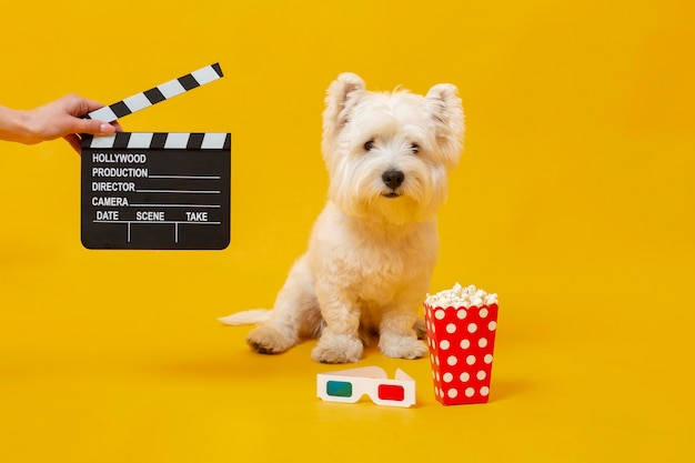 Schattige kleine hond met filmelementen