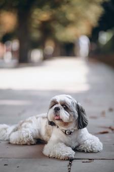 Schattige kleine hond met grote ogen