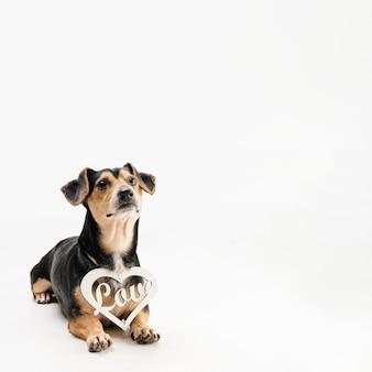 Schattige kleine hond met kopie ruimte