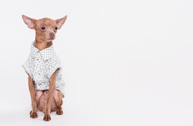 Schattige kleine hond met kostuum
