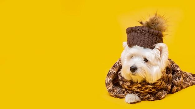 Schattige kleine hond met wintersjaal