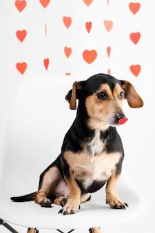 Schattige kleine hond omringd door harten