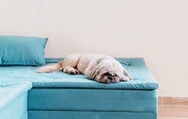 Schattige kleine hond ontspannen Premium Foto