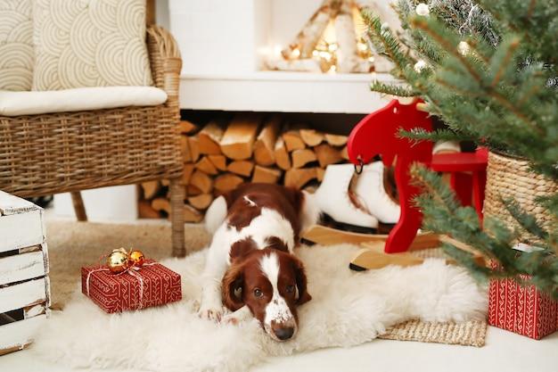 Schattige kleine hond op een kerst versierde woonkamer