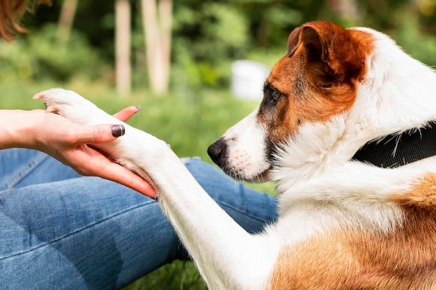 Schattige kleine hond spelen met zijn eigenaar