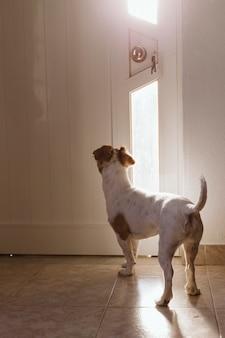 Schattige kleine hond staande bij de deur
