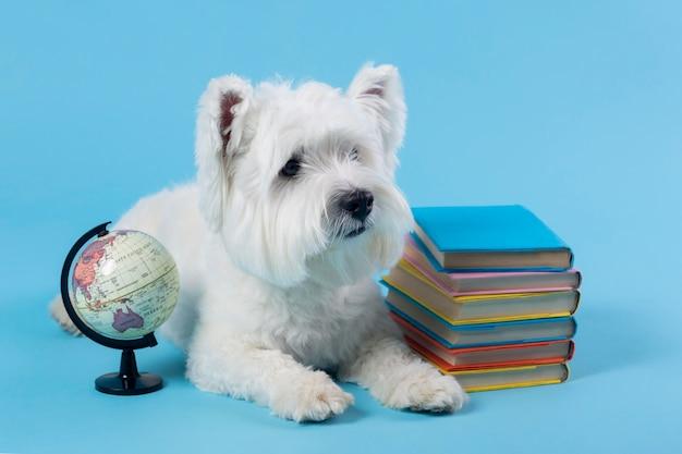 Schattige kleine hond terug naar school Gratis Foto