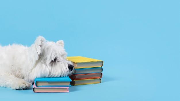 Schattige kleine hond terug naar school