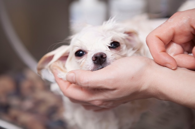 Schattige kleine hond wordt gewassen bij trimsalon