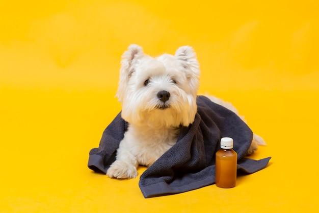 Schattige kleine hond ziek
