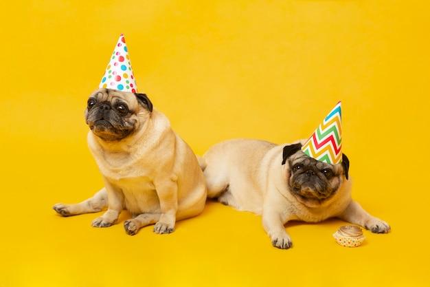Schattige kleine honden die een verjaardag vieren
