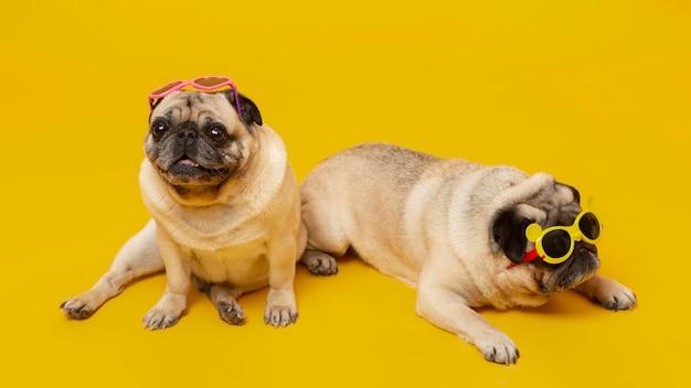 Schattige kleine honden geïsoleerd op geel