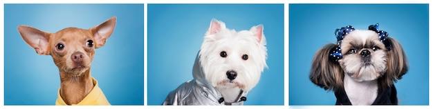 Schattige kleine honden portret