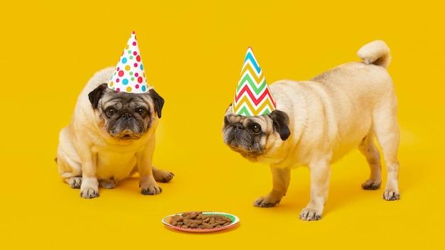 Schattige kleine honden vieren een verjaardag geïsoleerd op geel Premium Foto