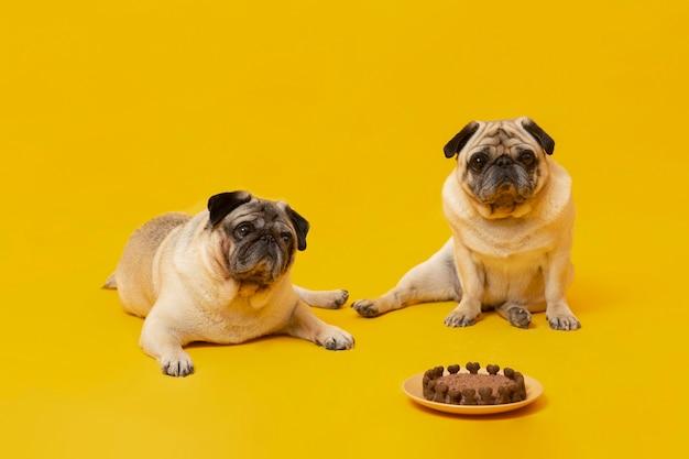 Schattige kleine honden vieren een verjaardag geïsoleerd op geel