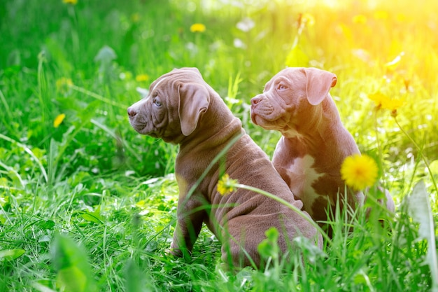 Schattige kleine honden zitten onder gele bloemen in groen gras in het park. buitenshuis. behang.