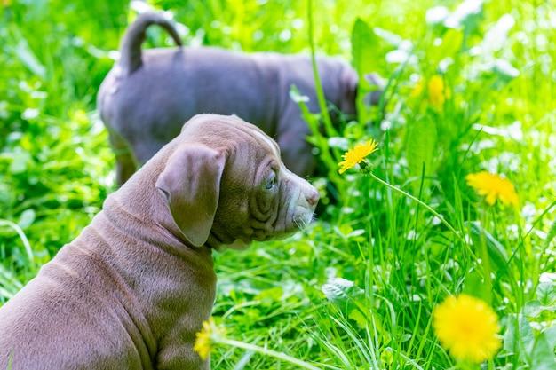 Schattige kleine honden zitten onder gele bloemen in groen gras in het park. buitenshuis.